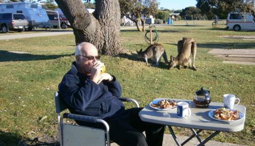 Breakfast with Kangaroos at Pambula