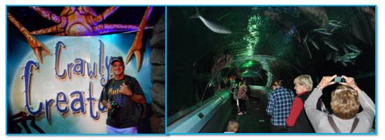 06_03_Underwater_world_collage