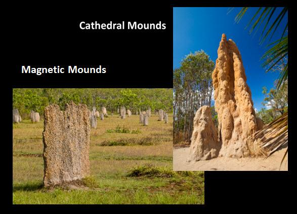 23_02_Termite_Mounds