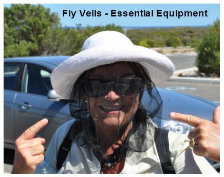 34_06_Fly_veil
