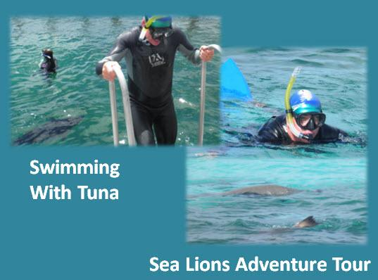 39_02_Swimming_with_Tuna&Sea_Lions